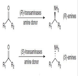 手性轉氨酶催化應用