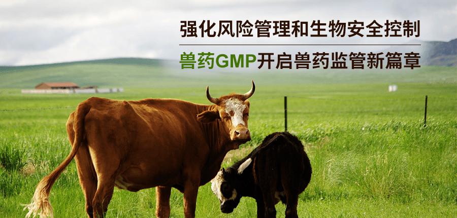 強化風險管理和生物安全控制,獸藥GMP開啟獸藥監管新篇章
