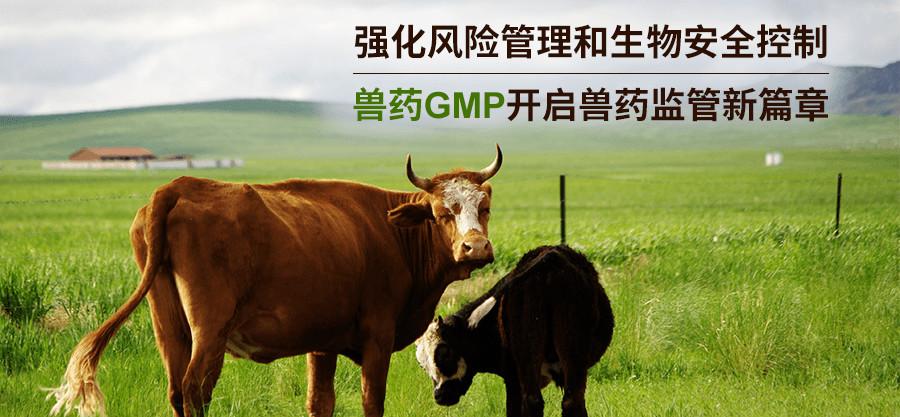 兽药GMP强化风险管理和生物安全控制