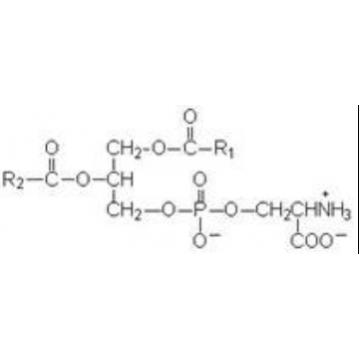 磷脂酰丝氨酸(phosphatidy serine:PS)