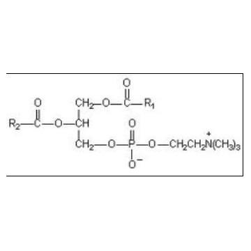 多烯磷脂酰胆碱90% 95% 99%(PPC 90%-99%)