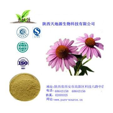 紫锥菊提取物多酚4%