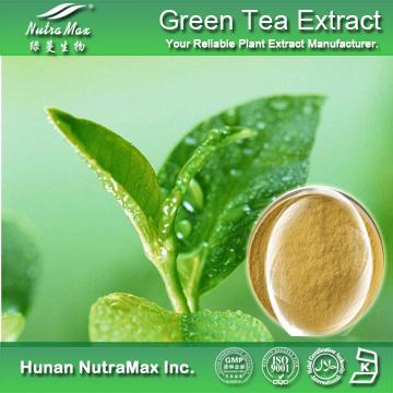 绿茶提取物多酚/EGCG/茶氨酸