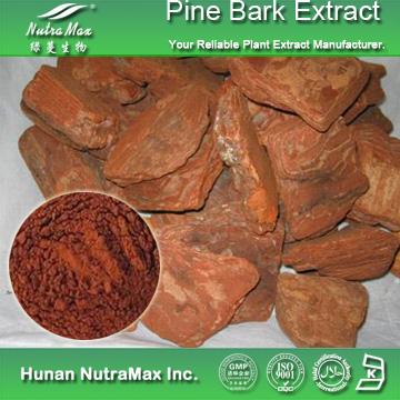 松树皮提取物原花青素95%