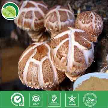 香菇提取物  多糖40%