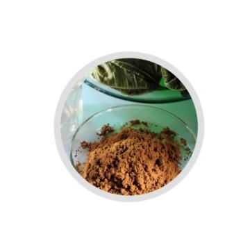 桑叶提取物 Mulberry Leaf Extract