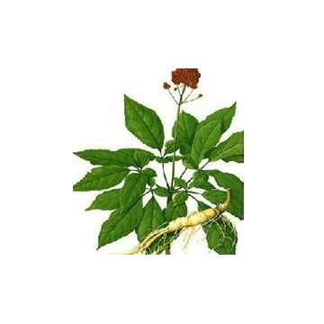 植物茎叶结构图