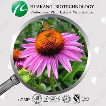 紫锥菊提取物,多酚7% & 菊苣酸2%