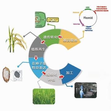 植物反应器技术平台--(重组蛋白质蛋白质和多肽表达服务;蛋白质和多肽的下游纯化、小试或中试工艺开发等技术服务)