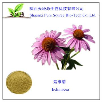 供应紫锥菊提取物,4%多酚