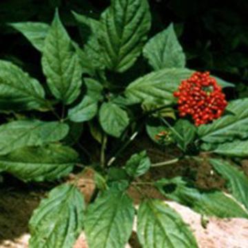 生物茎叶的结构图片