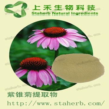 紫锥菊提取物 多酚 菊苣酸