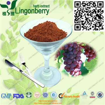 厂家直供 天然植提 野生山葡萄籽提取物