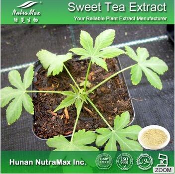 甜茶提取物甜茶苷40%~80%