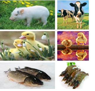 动物保健类抗生素那西肽,兽药抗生素添加剂,高纯度那西肽