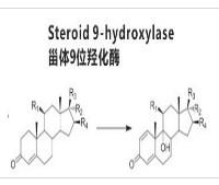 甾体9位羟化酶