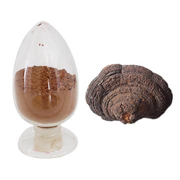 裂蹄木层孔菌