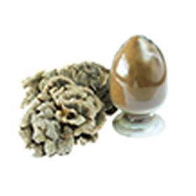 白桦茸粉 提取物