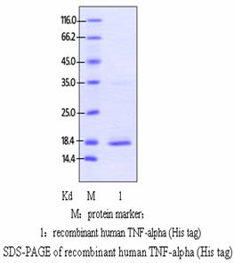 Human TNFα