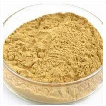 人參葉提取物 10% Panax Ginseng(Leaf)Extract Powder