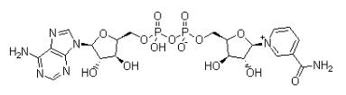 β-煙酰胺腺嘌呤二核苷酸