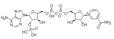煙酰胺腺嘌呤二核苷酸磷酸