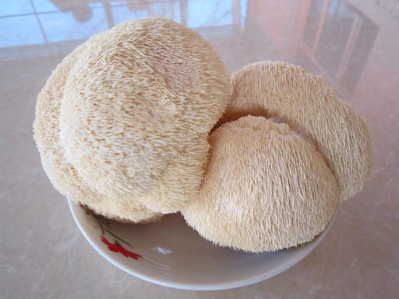 猴頭菇提取物