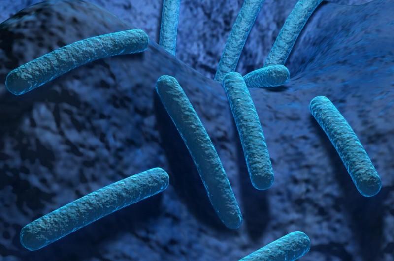 凝结芽孢杆菌LactoSpore