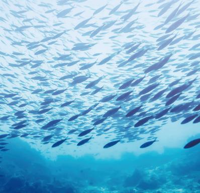 酶解魚肽蛋白