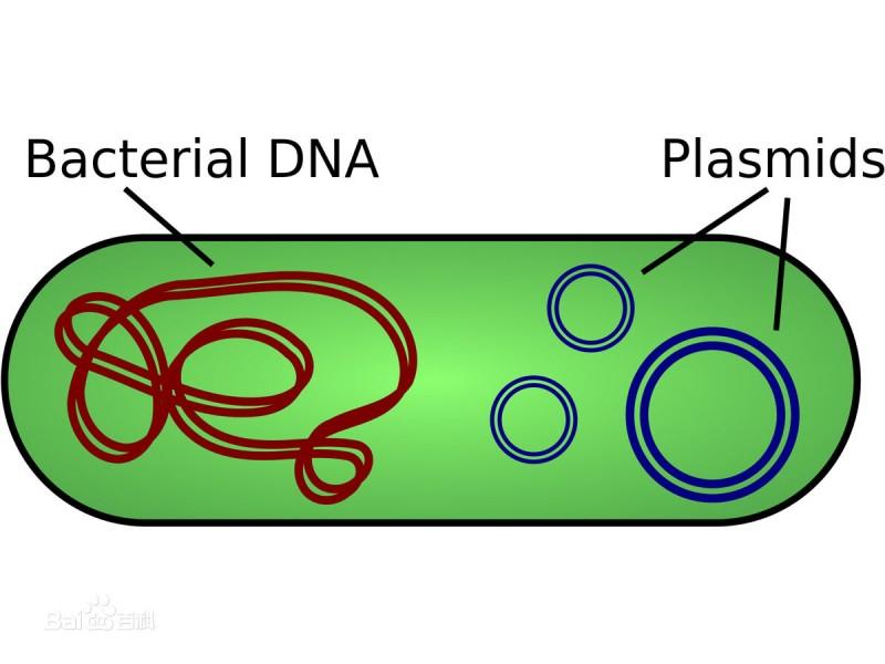 质粒DNA制备