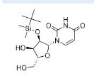 2'-O-叔丁基二甲基硅烷基尿苷