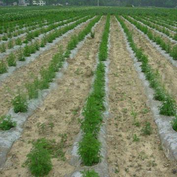 青蒿素 植物提取物