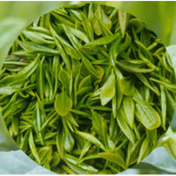 茶多酚(Tea Polyphenols)