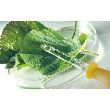 叶绿素镁钠盐 植物提取物