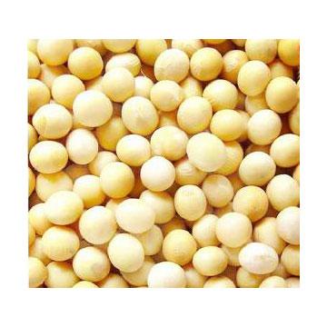 大豆异黄酮40%、80% 植物提取物