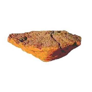 桑黄细粉 植物提取物