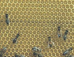 蜂胶产品图片