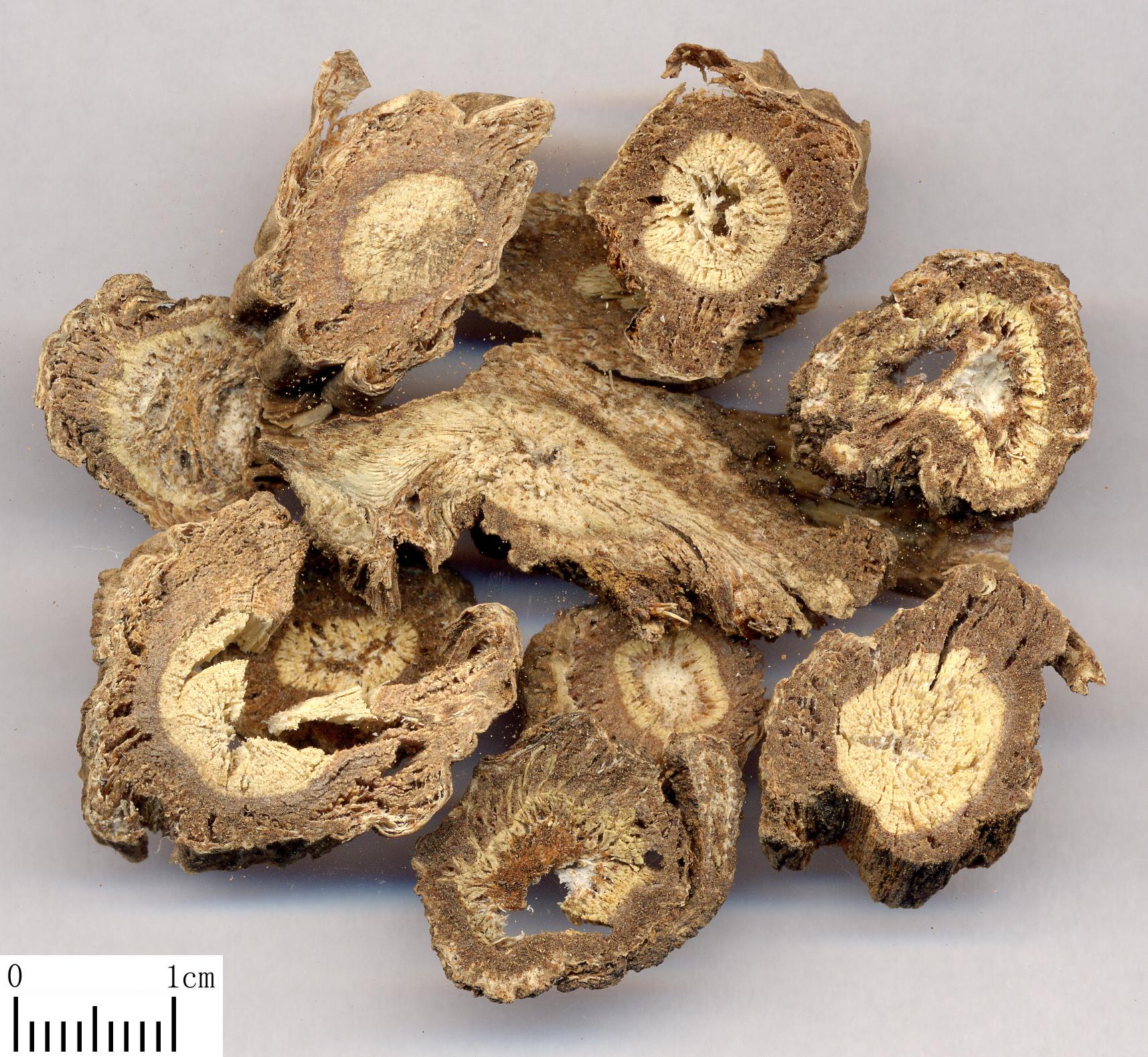 独活提取物Doubleteeth Pubescent Angelica Root P.E.