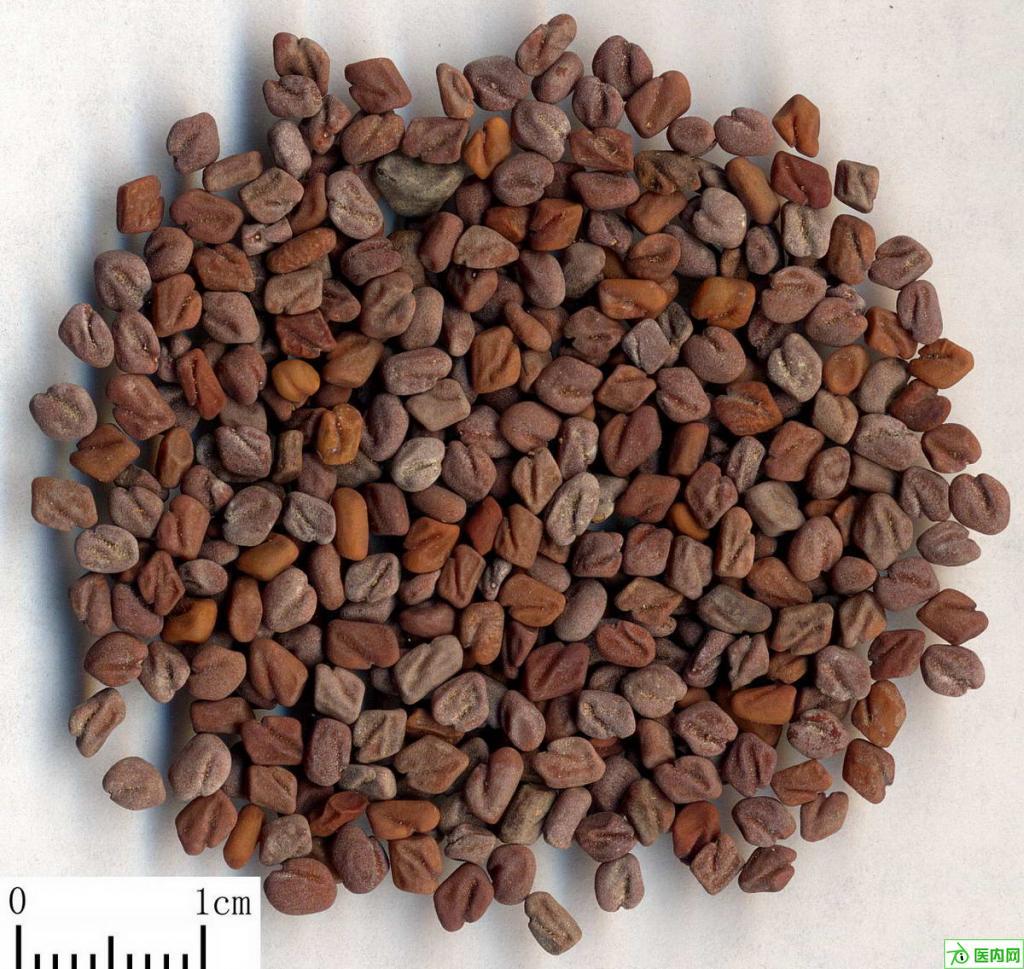 葫芦巴Common Fenugreek Seed