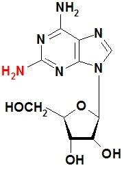 2,6-二氨基嘌呤核苷 2-NH2-A
