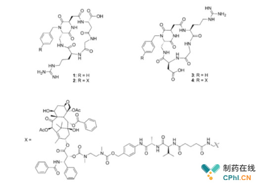 整合素配体结构