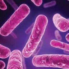 """非抗生素药物新发现 对抗""""超级细菌""""显成效"""