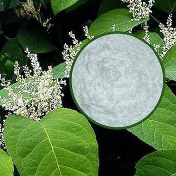 被誉为保健利器的白藜芦醇到底有多神奇?