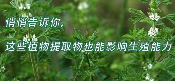 悄悄告诉你,这些植物提取物也能影响生殖能力