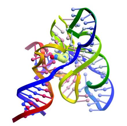 上图为:默克公司保留的核糖核酸化合物与细菌核黄素核糖RNA结合的模型