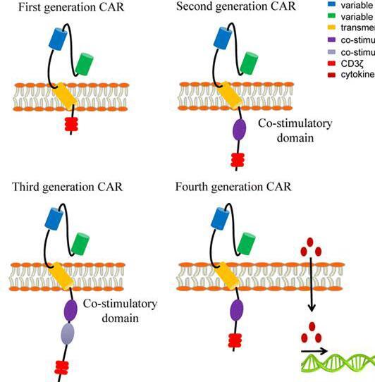 金笔奖 | 改善CAR-T细胞疗法在实体瘤应用中疗效策略一览