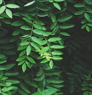 域外传珍-欧盟传统植物药管理要点解读之三