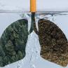 小细胞肺癌≠无药可救,新药lurbinectedin获批成为小细胞肺癌治疗孤儿药