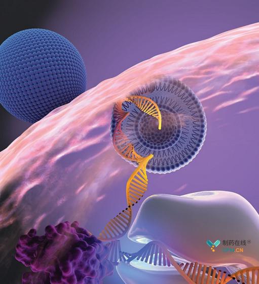 脂质纳米粒