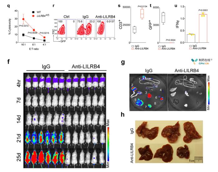 肿瘤细胞无法抑制T细胞增殖